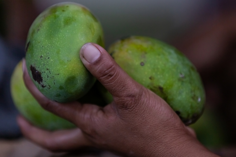 Mangos in Hand