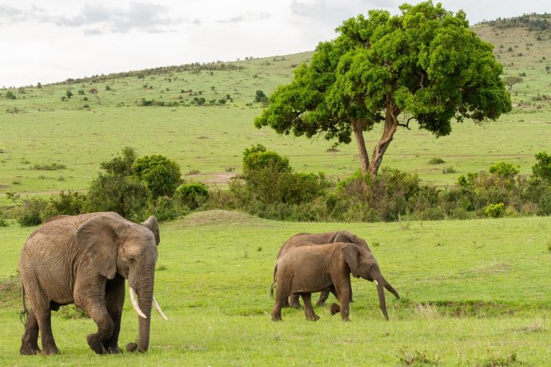 Kenya-16