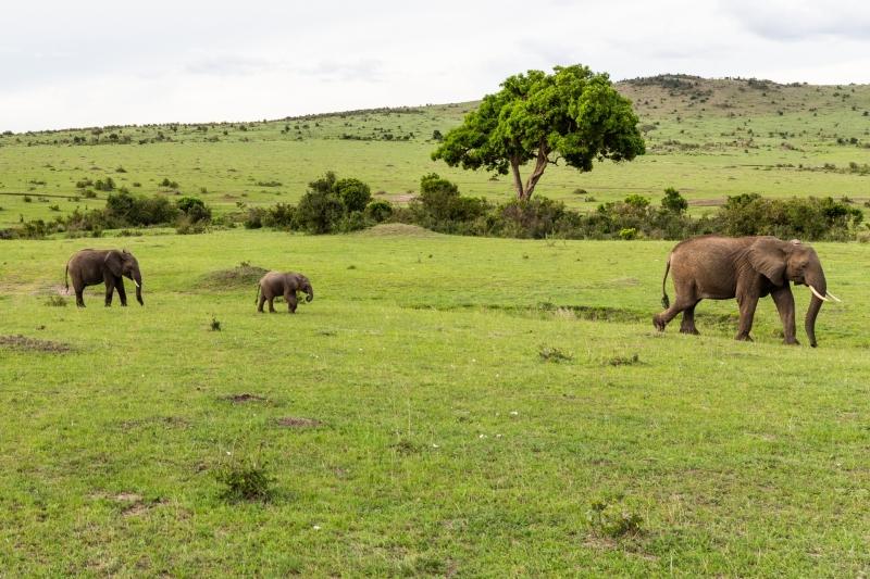 Kenya-2