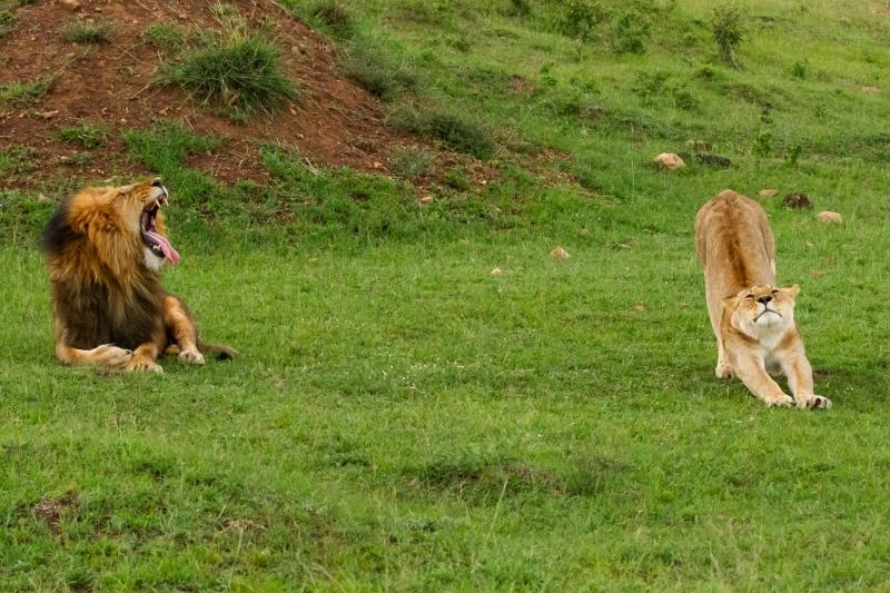 Yawn and Stretch