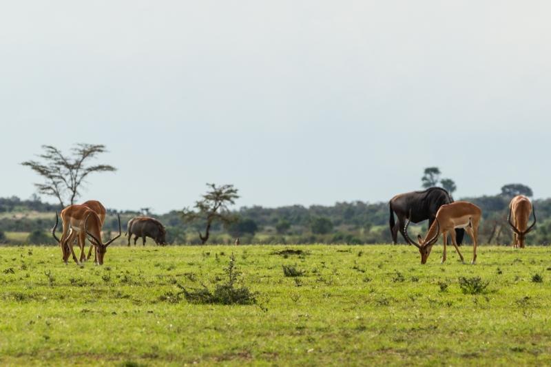 Kenya-4