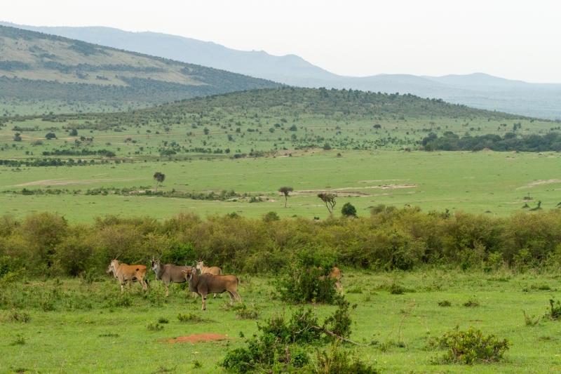 Kenya-47