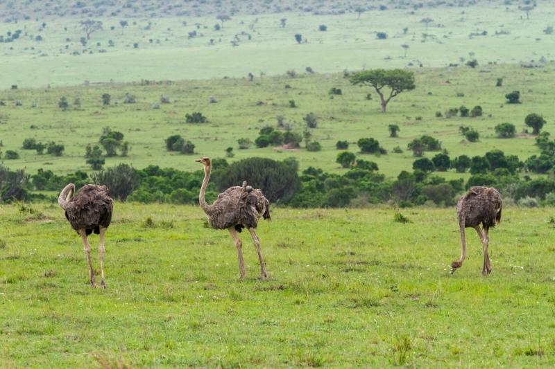 Kenya-52