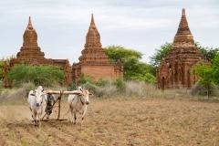 Myanmar-39-Edit