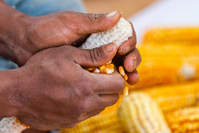 Corn Hands