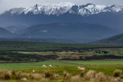 New-Zealand-23