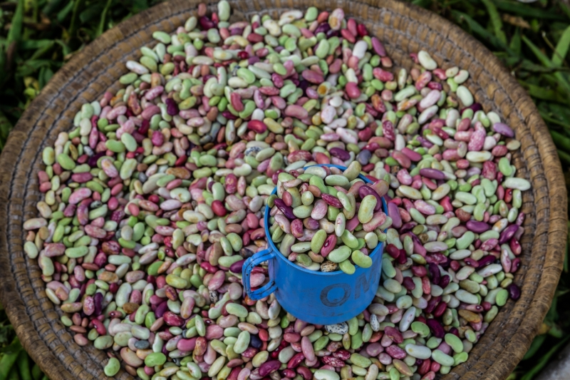 Colorful Beans From Local Market