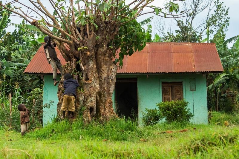 Friends Climbing a Tree