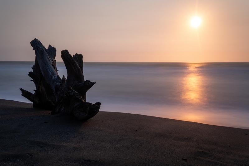 Driftwood at Sunset