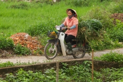 Woman on Motorbike with Sugar Cane