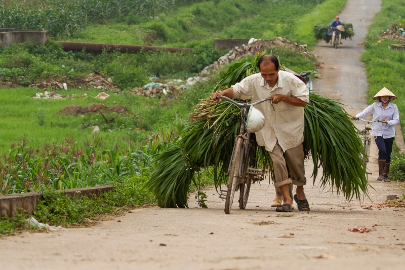 Man with Sugar Cane on Bicycle